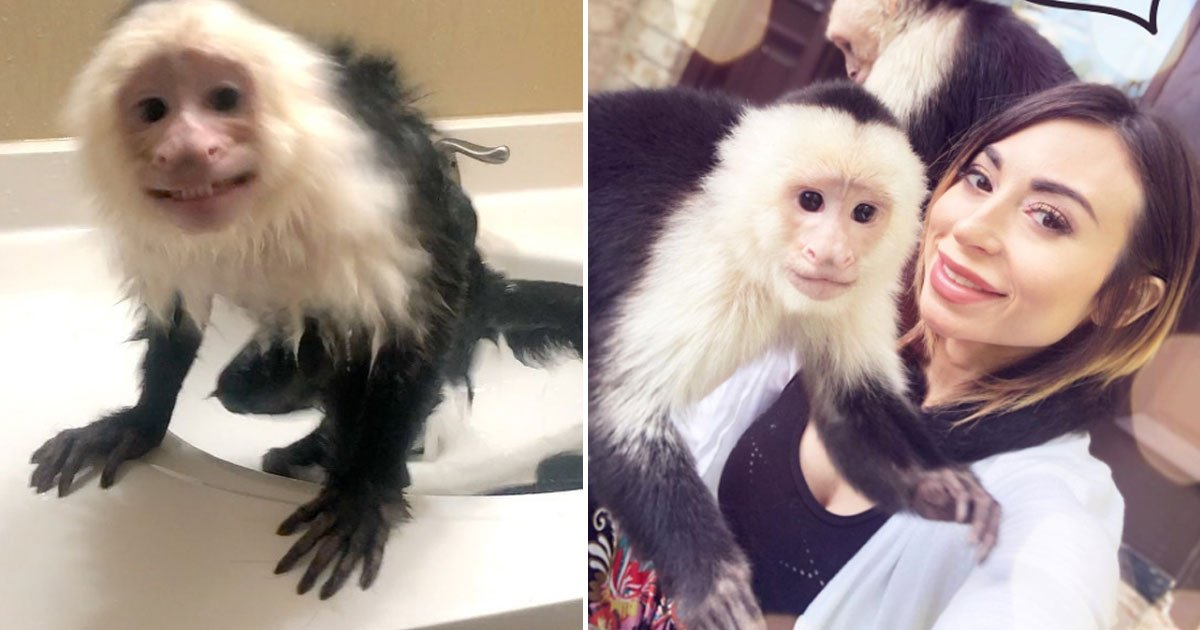 oman pet monkey.jpg?resize=412,232 - Woman - Who Treats Her Pet Monkey As Her Baby - Says She Is Unable To Date Because Of Her Monkey
