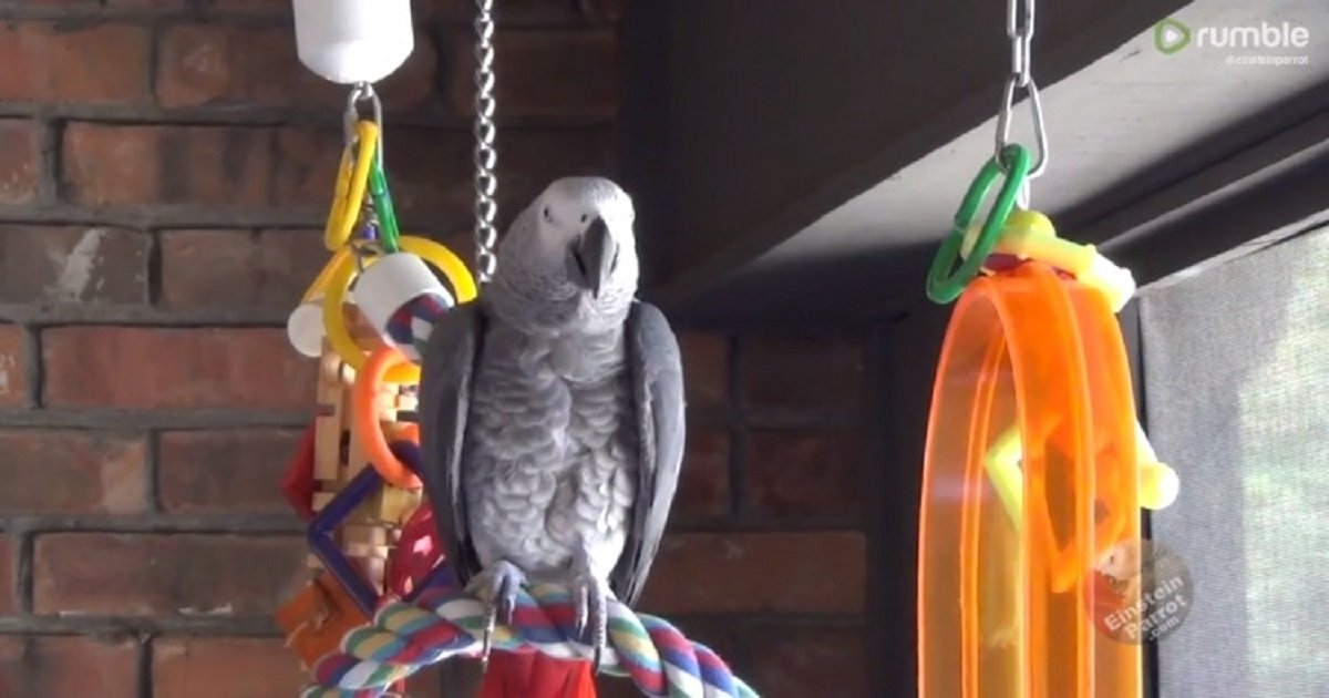 p3 5.jpg?resize=412,232 - This Parrot Could Perfectly Mimic The Sound Of Water