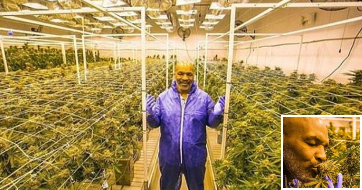 s 1 4.png?resize=412,232 - Mike Tyson Discloses That 40,000 Tons of Pot is Smoked by Him in His Cannabis Vacation Ranch