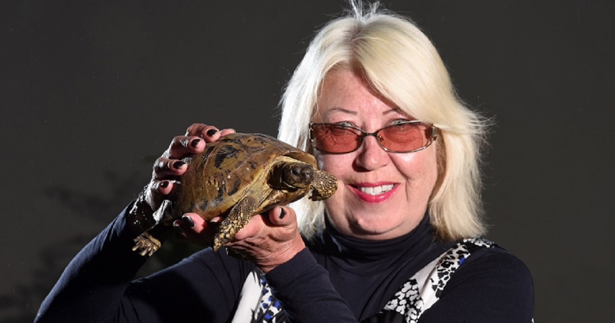 t3 5.jpg?resize=412,232 - At 121 Years Old, This Turtle Is The World's Oldest Living Pet And May Live For Another 50 Years