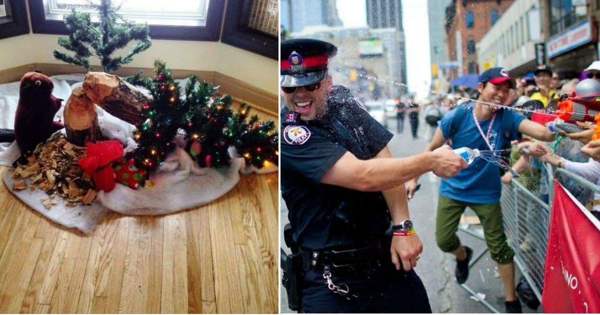 "untitled 48.jpg?resize=300,169 - ""누가 봐도 캐나다네""...'캐나다'를 제대로 압축해놓았다는 사진들 TOP 10"
