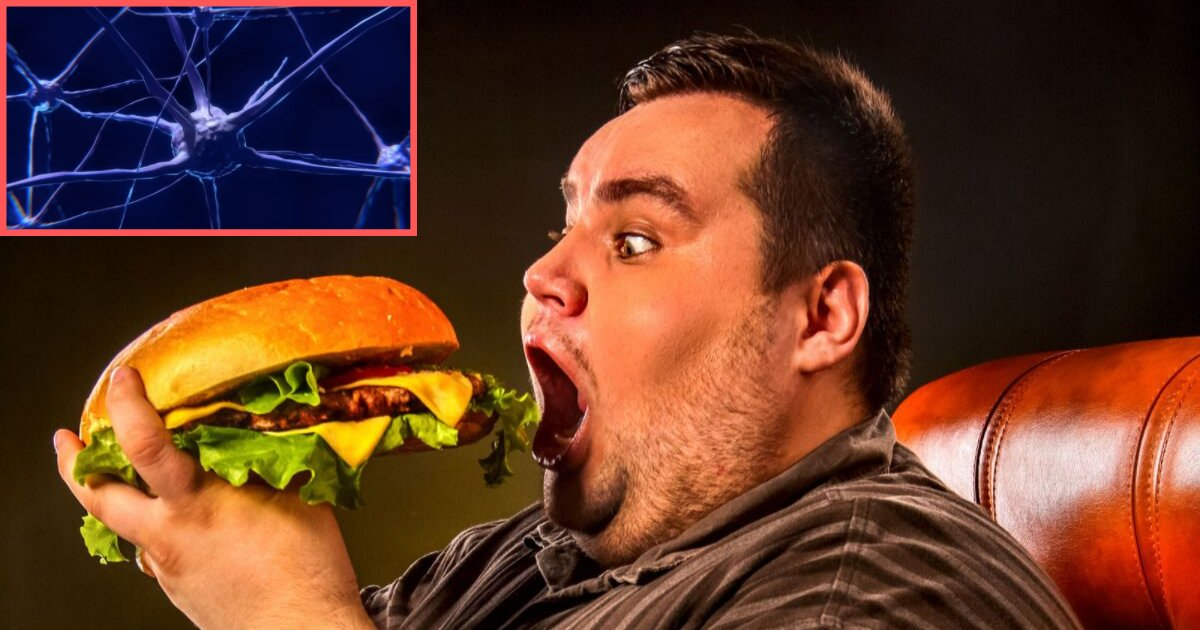 untitled design 1 6.png?resize=412,232 - Scientists Have Invented A Chip That Zaps The Brain of the Overweight People When They Want to Over Eat