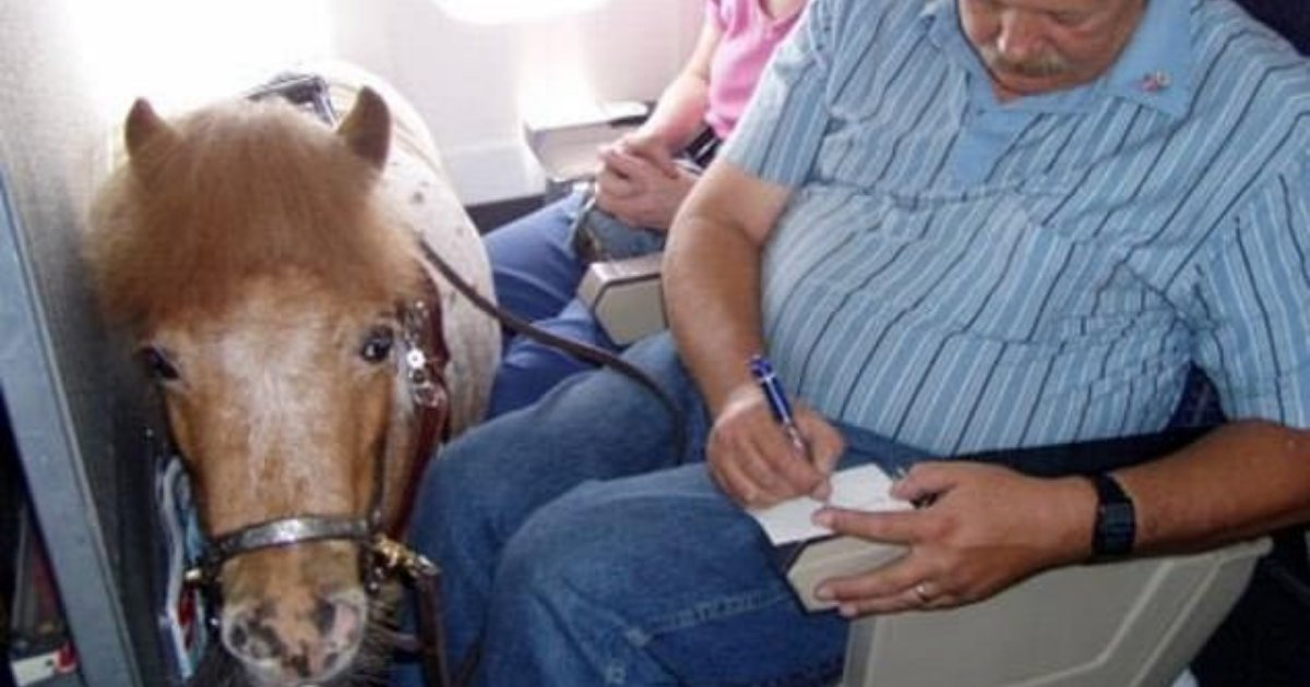 untitled design 38.png?resize=412,232 - Couple Brought Miniature Service Horse With Them On Plane Under New Flight Regulations