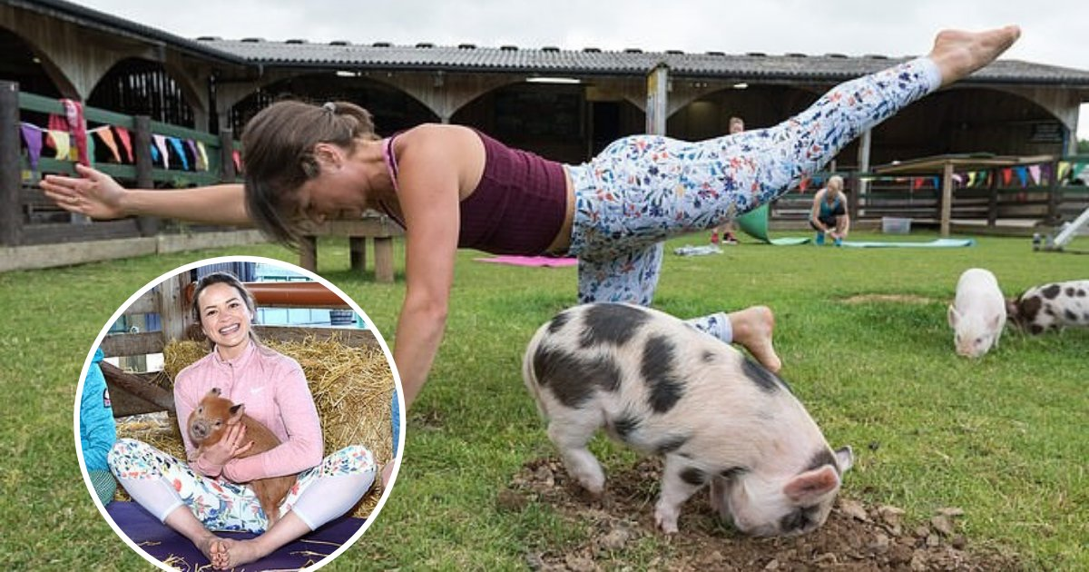 untitled design 50.png?resize=1200,630 - Farm Offers Pilates Classes During Which Cute Little Pigs Cuddle With Humans