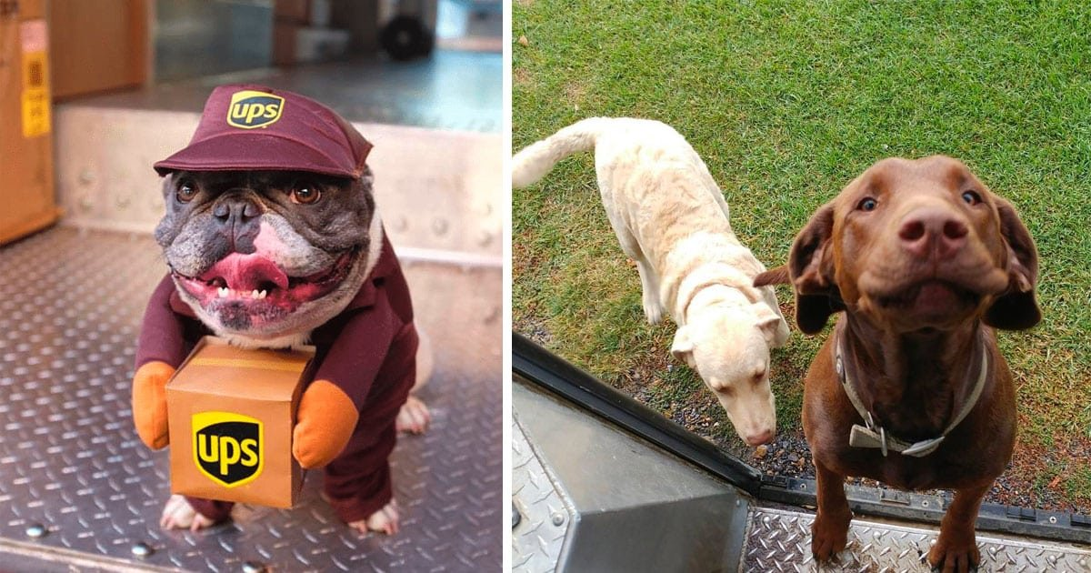 ups drivers.jpeg?resize=412,232 - 30+ Of The Most Adorable Photos UPS Drivers Have Taken Of Dogs On Their Delivery Job