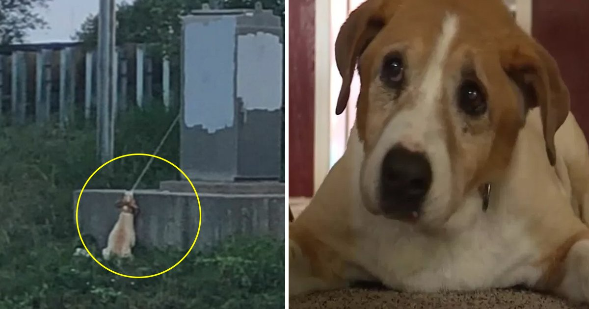 vvv 1.jpg?resize=1200,630 - This Dog Was Hanging With An Electrical Cord, See How A Man Saved His Life
