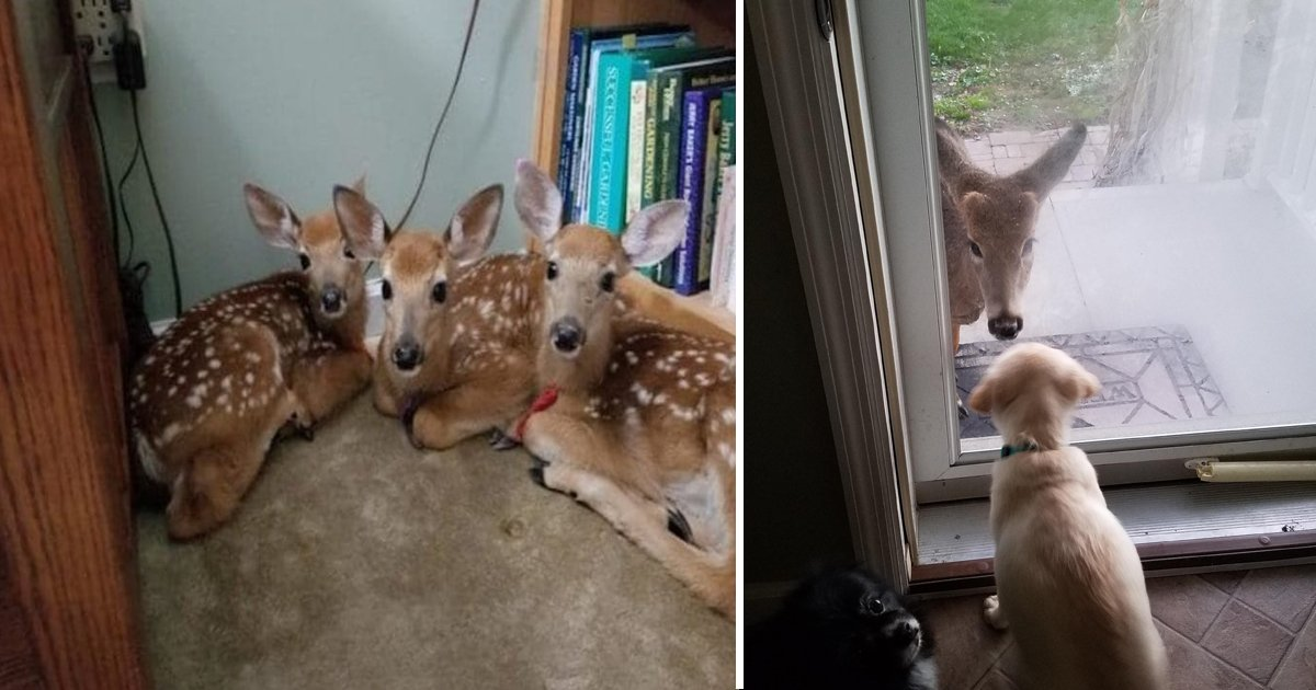 xz.jpg?resize=1200,630 - This Woman Living In Woods Left Her Door Opened And Found Three Lovely Deer Inside Her Home