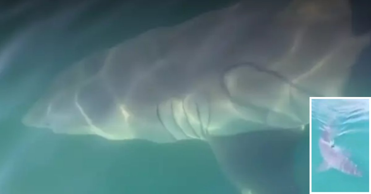 y 6 3.png?resize=412,232 - A Great White Shark of 17 Feet Was Spotted By The Siblings As It Swimming Alongside Their Boat