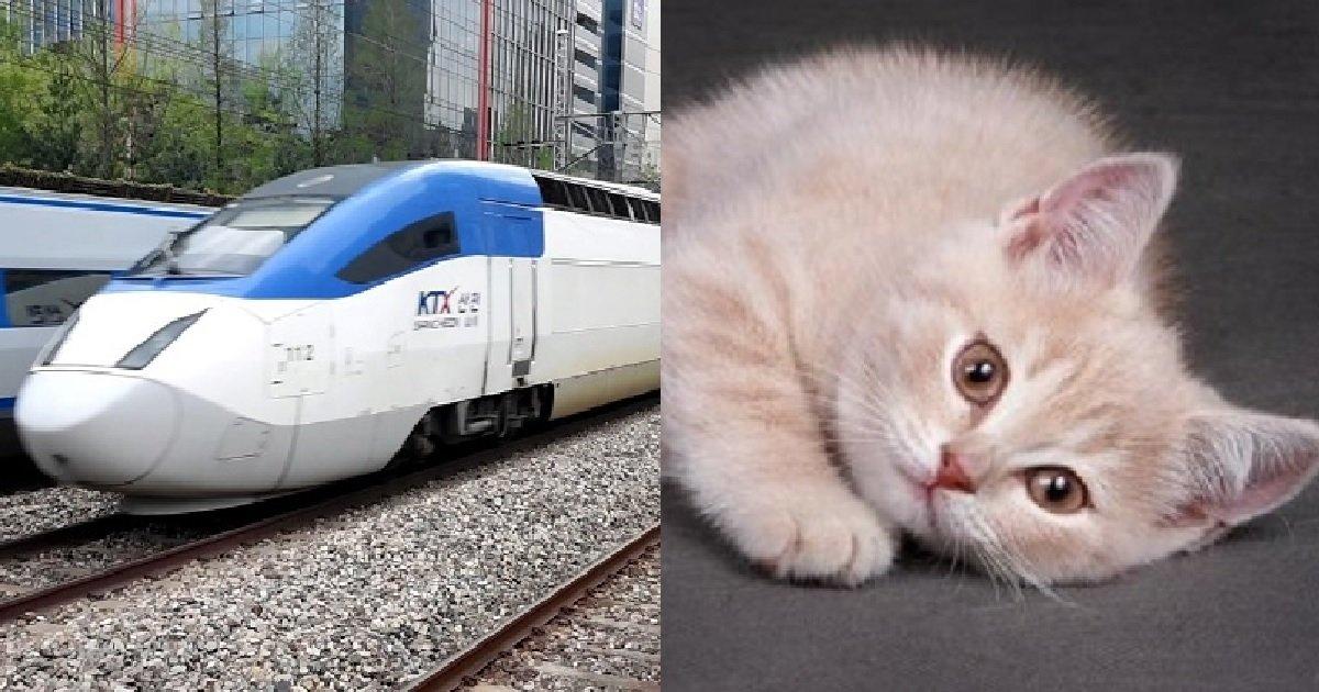 "1 12.jpg?resize=412,275 - ""만석으로 꽉 찬 기차에서 고양이를 치워달라고 한 게 잘못인가요?"""