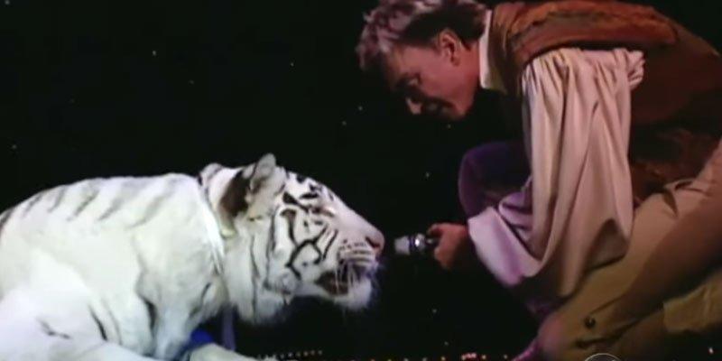 Resultado de imagen de Contacto accidental con animales salvajes