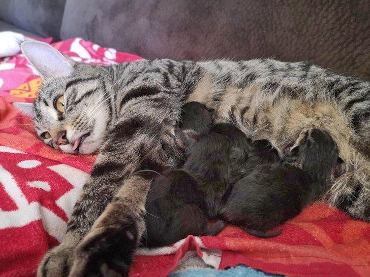 25 Fotos que mostram o que realmente é ser mãe