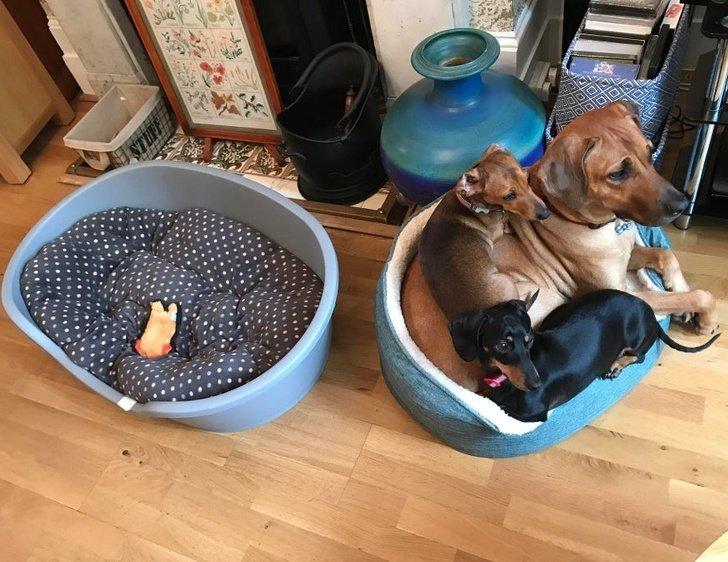 20 Pets que levaram os donos ao limite da loucura