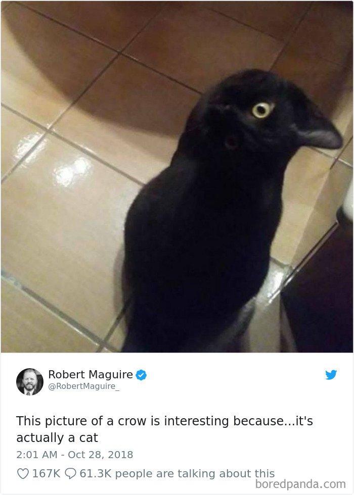 Cat-Tweets