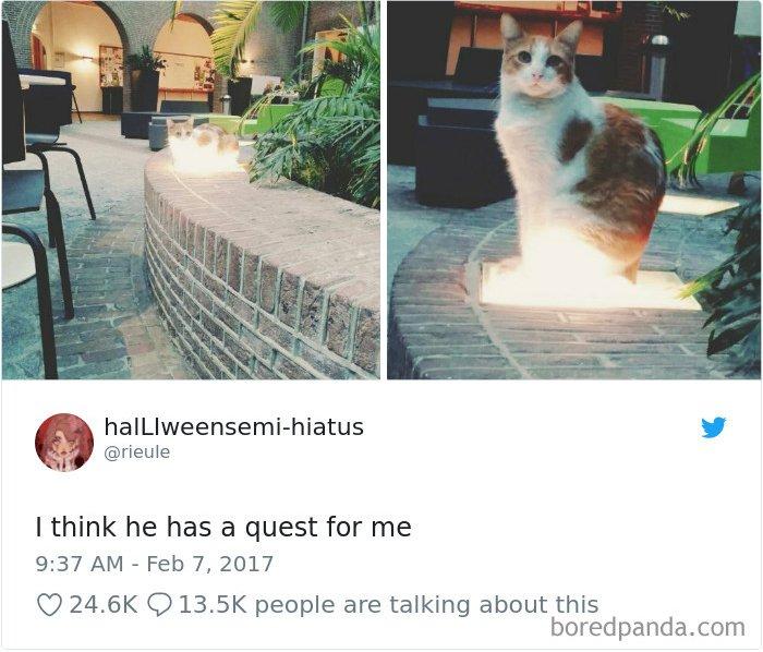Cat Tweets