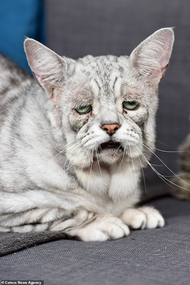 Sour puss! Toby hasEhlers-Danlos syndrome, a collagen disorder that makes his skin saggy and gives him a permanently grumpy look