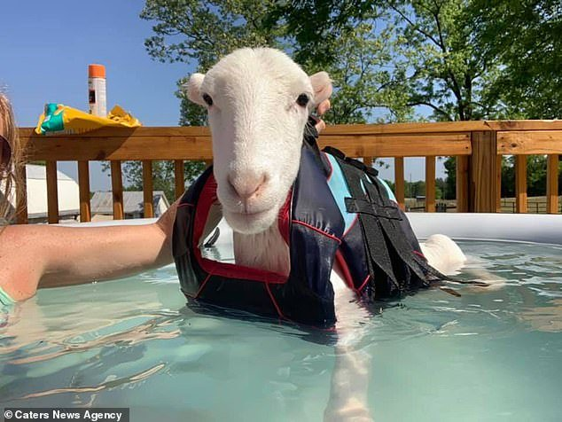 Moko, pictured in the pool,was declared disabled after birth as he wasn