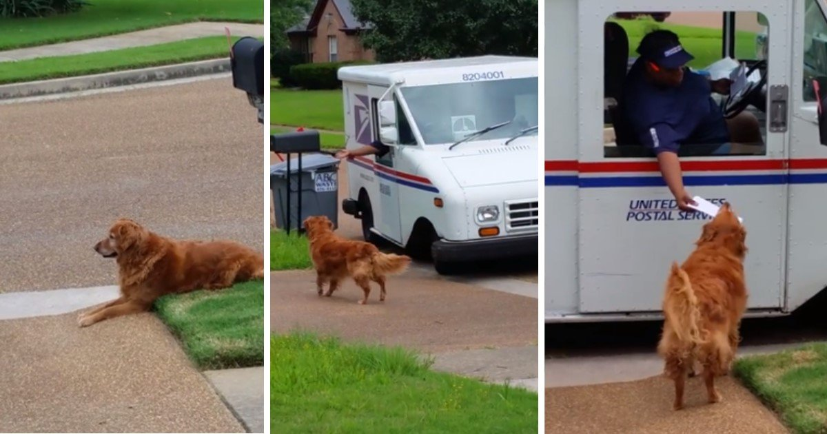 a 29.jpg?resize=1200,630 - Responsible Golden Retriever Waited Patiently For The Mail Truck To Deliver Mail To His Owners