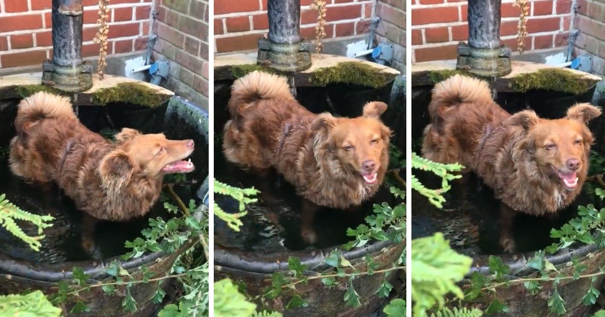 a 34.jpg?resize=1200,630 - Playful Dog Had A Delightful Bath In A Fountain After The Morning Walk