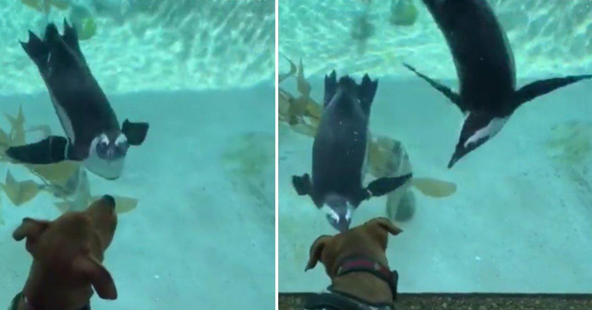 a 87.jpg?resize=412,232 - Vidéo : l'adorable rencontre entre un pingouin et un chien