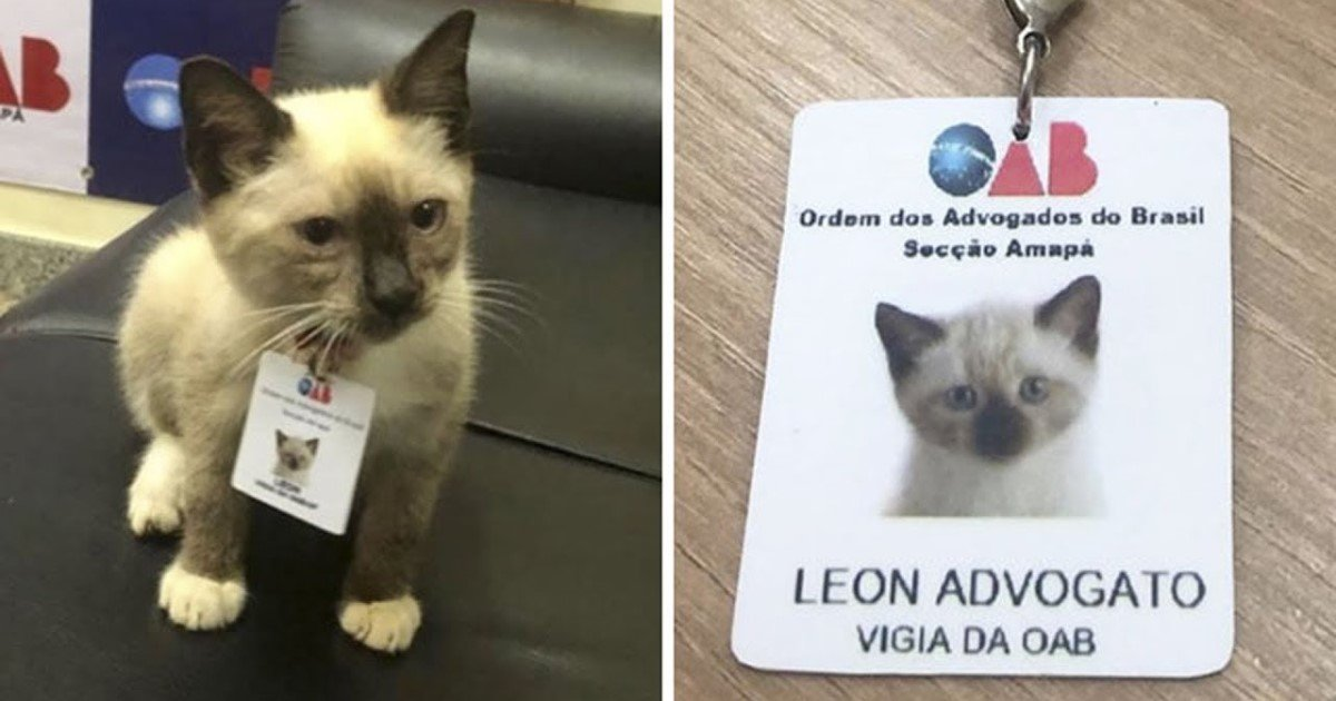 a 99.jpg?resize=1200,630 - Law Firm Received Complaints Of A Stray Cat Roaming Around In The Reception Area So They Decided To Hire Him