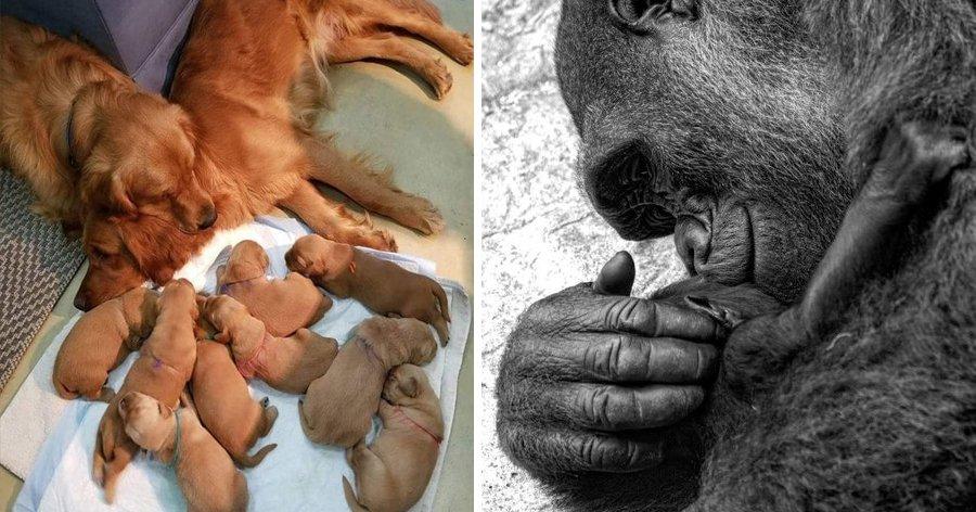 a3 2.jpg?resize=1200,630 - 25 Fotos que mostram o que realmente é ser mãe
