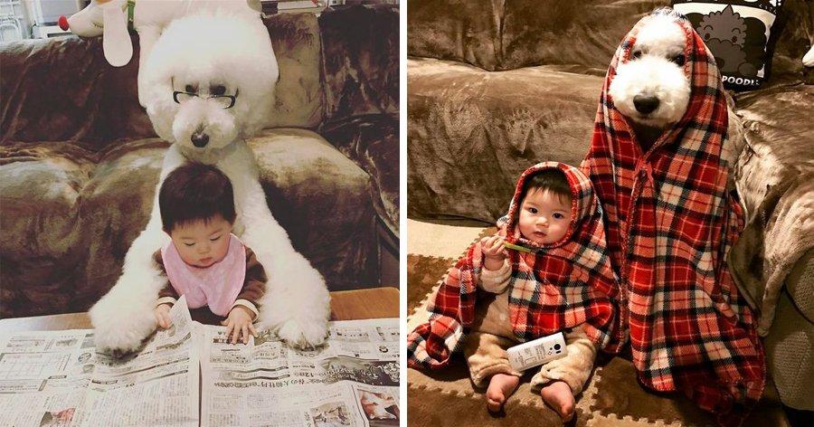 a4 1.jpg?resize=1200,630 - Garotinha japonesa e seu amigo poodle estão conquistando a internet com sua fofura