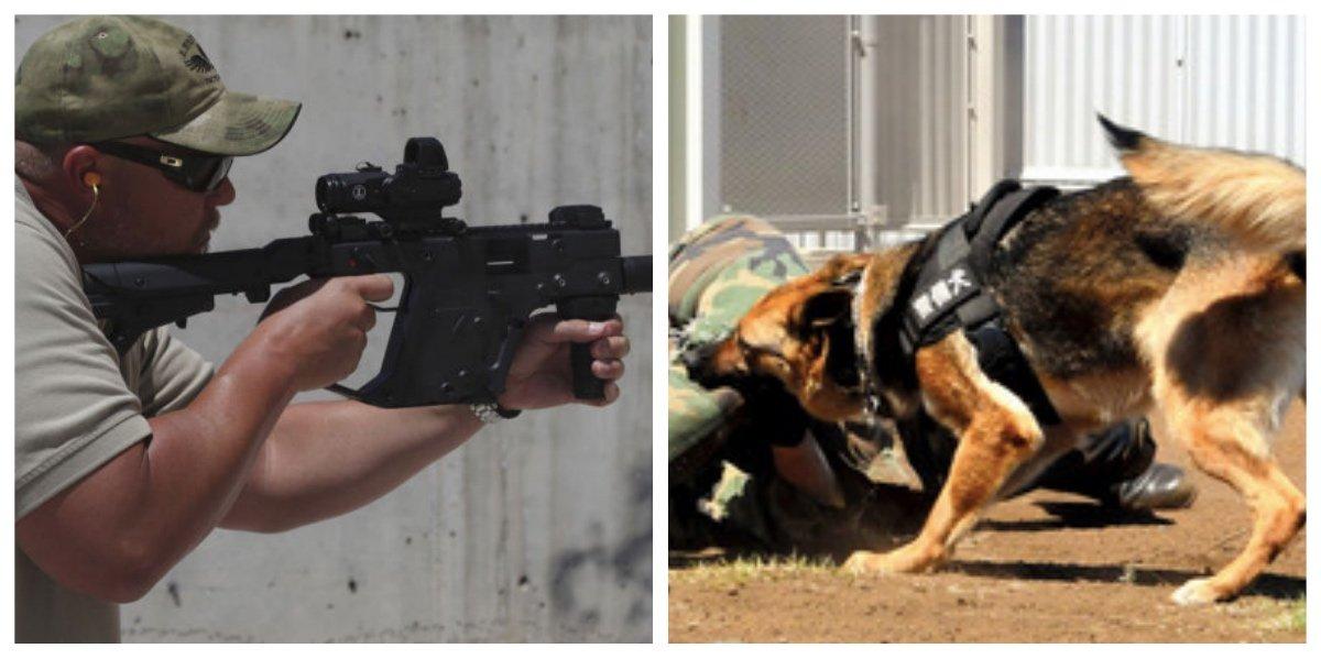 "collage fotor 31.jpg?resize=1200,630 - ""クローン犬が子供を守る!""「犬だって生きているのに人間の勝手すぎる!」と批判殺到。その新システムとは"
