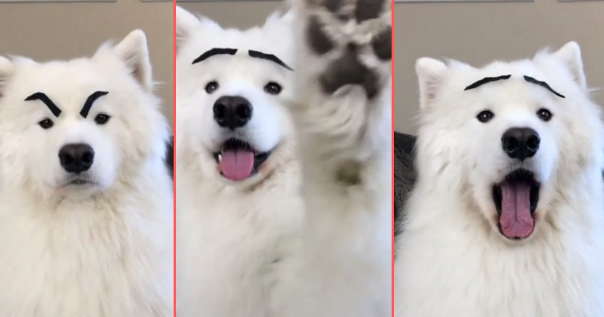 d 3 1.png?resize=1200,630 - Dog Makes the Funniest Expressions with Fake Eyebrows