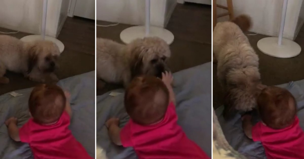 d4 2.png?resize=412,232 - Overly Excited Pup Has the Time of His Life Playing With the Baby