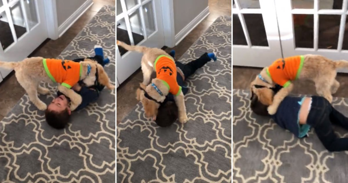 d4 4.png?resize=1200,630 - This Wrestling Match Between A Puppy and A Toddler Is Just Too Cute