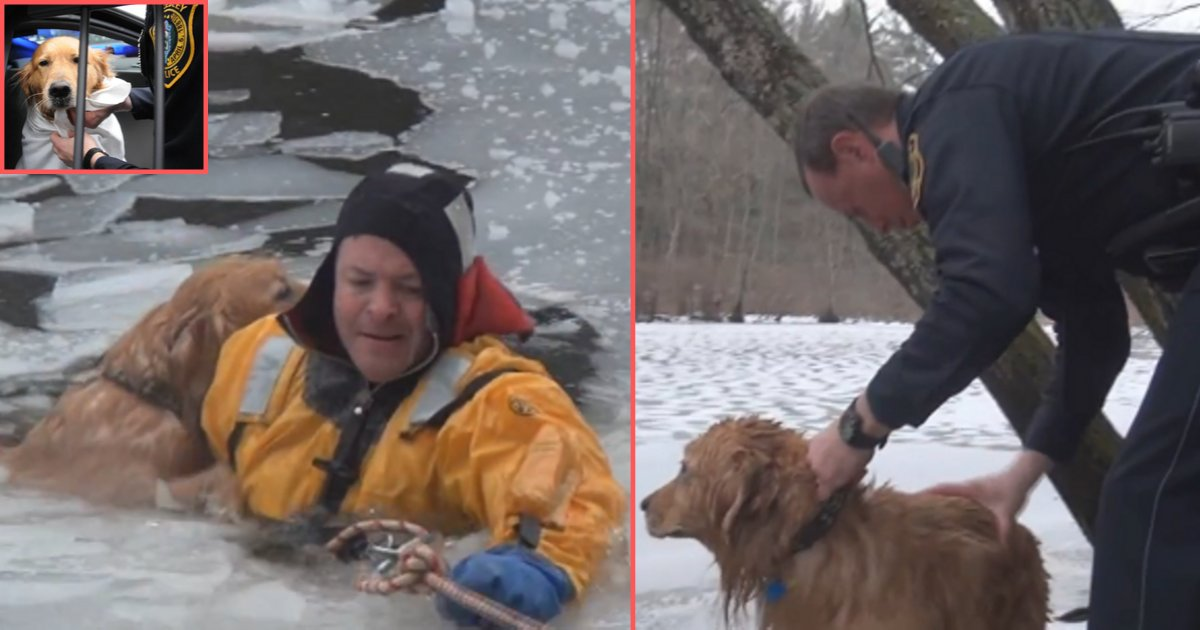 d5 9.png?resize=732,290 - A Dog Was Rescued From The Icy River By Firefighters
