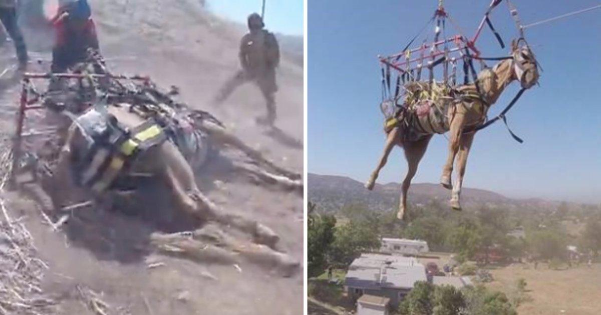 d8.png?resize=1200,630 - Les pompiers sauvent un cheval blessé et coincé sur une colline à l'aide d'un hélicoptère