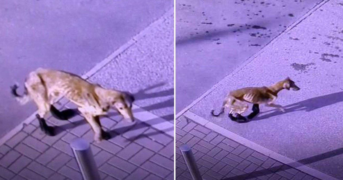 dog abandoned.jpg?resize=1200,630 - An Injured Dog - Who Was Looking For Help After Being Abandoned - Is Now Recovering