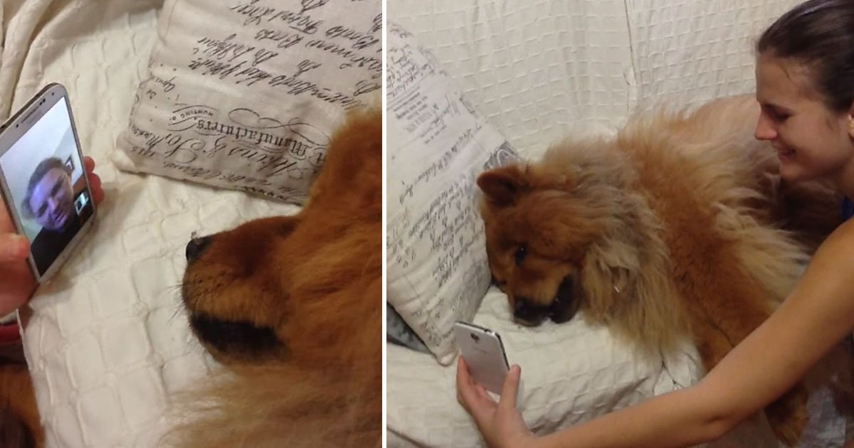 dog facetime mother.jpg?resize=412,232 - Dog FaceTimed Her Mother Who Was Away From Her For 3 Weeks