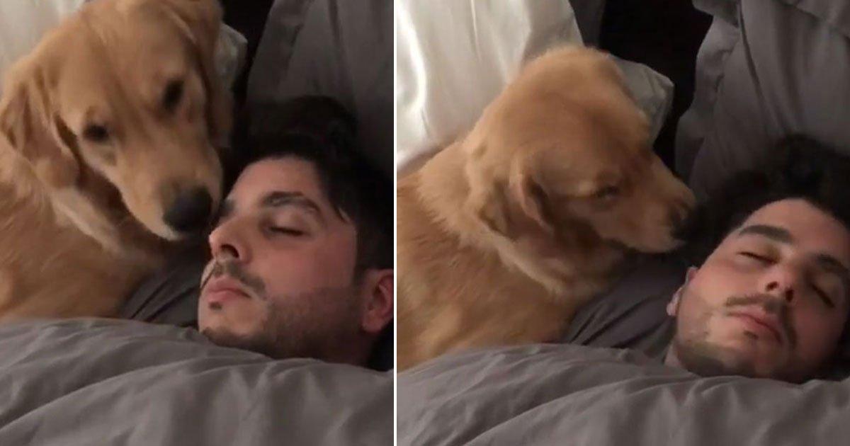 dog tries wake up owner.jpg?resize=1200,630 - Regardez la réaction de ce chien lorsqu'il ne parvient pas à réveiller son maître
