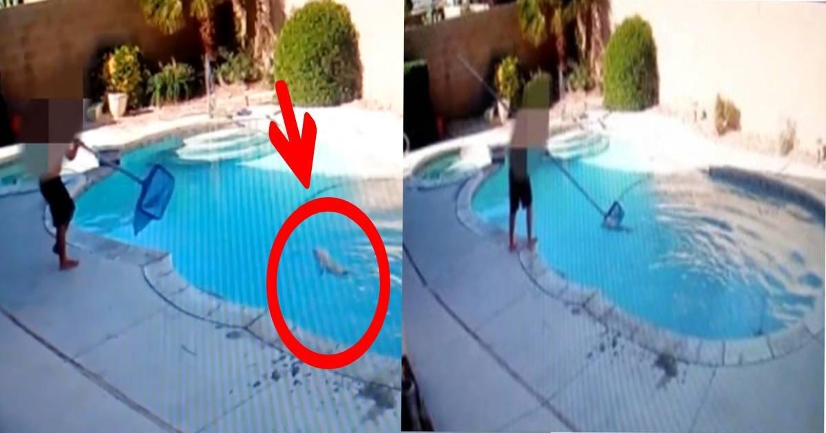 e696b0e8a68fe38397e383ade382b8e382a7e382afe38388 3 4.jpg?resize=1200,630 - 8歳男児、犬をプールに投げ入れ水中に何度も沈める「子供のくせに残酷すぎる」「精神的に助けが必要...」