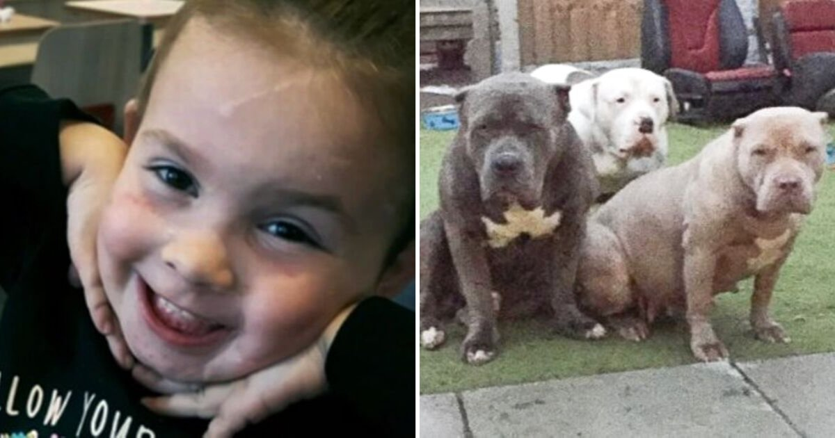 ella6.png?resize=1200,630 - Two-Year-Old Girl Hospitalized After FIVE American Bully Dogs Burst Through Their Fence