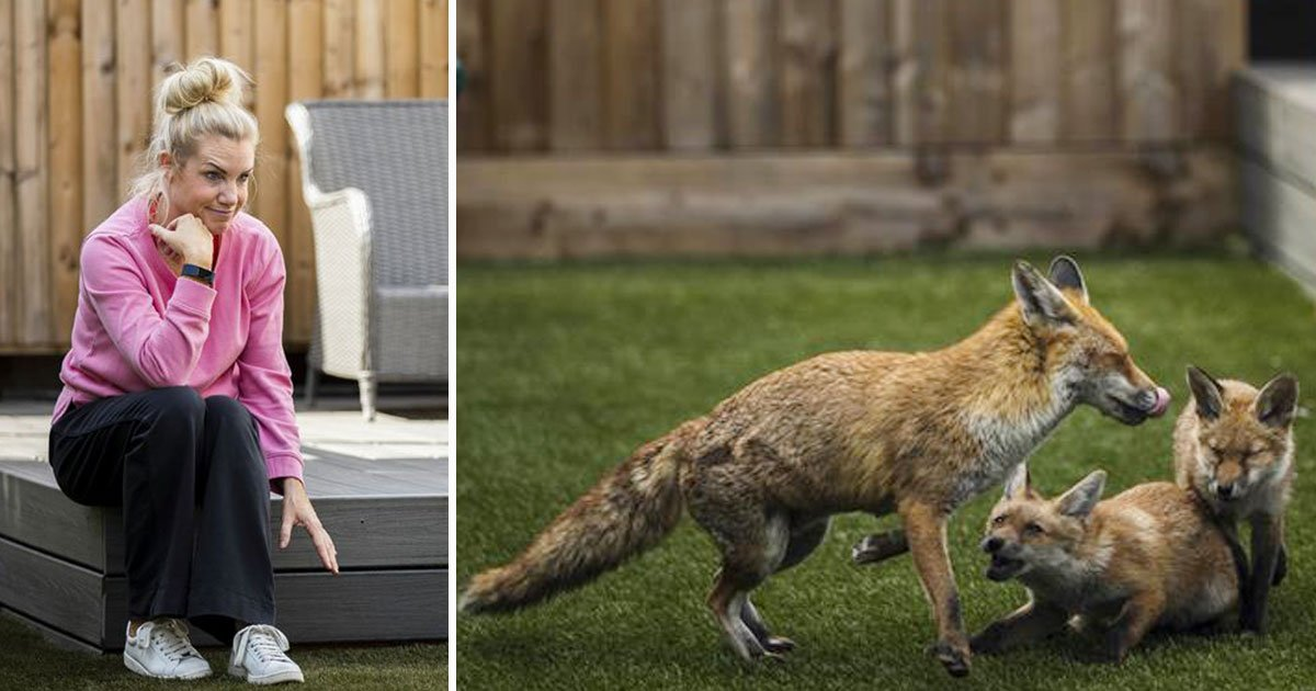 foxes moved in home.jpg?resize=1200,630 - Seven Foxes Destroyed A Family's Dream Garden After Moving In