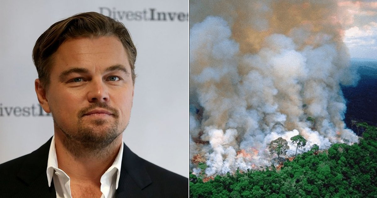 fsdffsdf.jpg?resize=412,232 - Leonardo Dicaprio  Requested For A Donation Of $5 Million To Save Amazon Forest From Wildfire