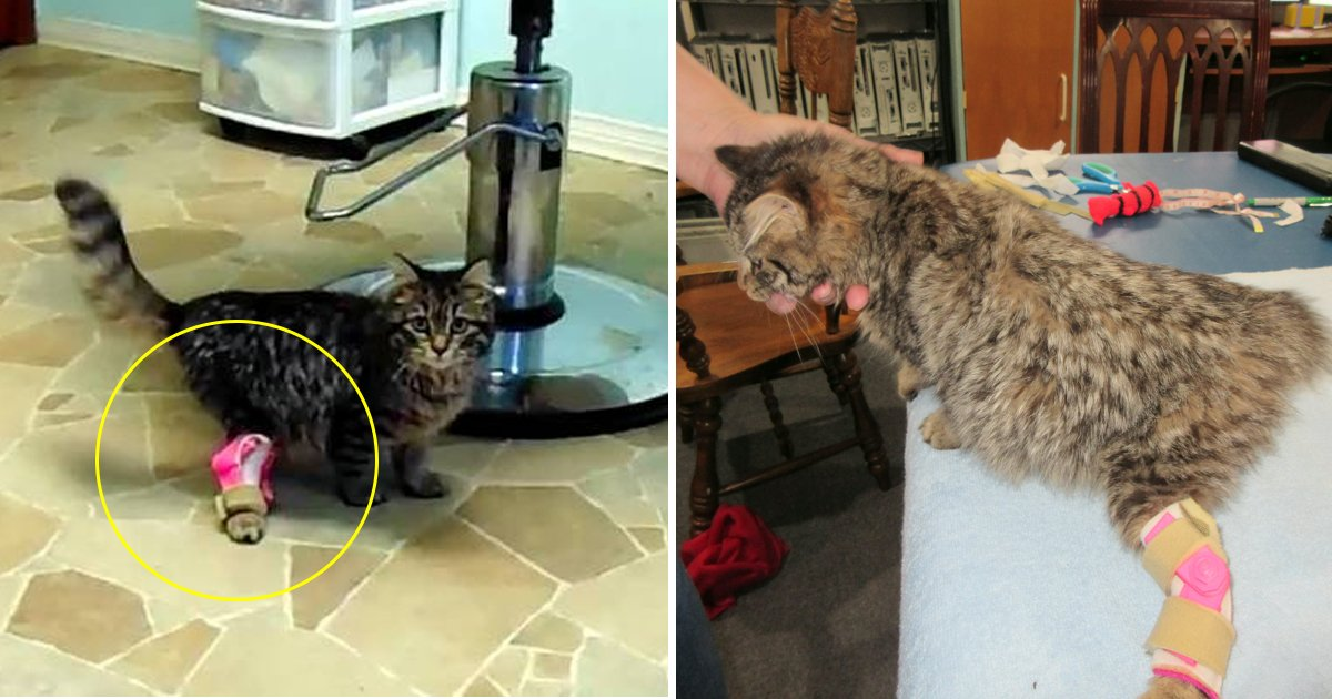 hhssfs.jpg?resize=1200,630 - A Wobbly Kitten Was Made Able To Walk Normally With 3D Printed Leg