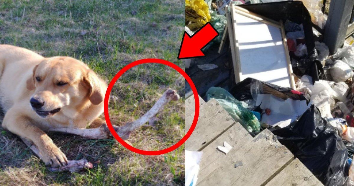 hone.png?resize=1200,630 - 野生の熊が犬に動物の骨を渡しゴミを散らかしたのを見逃してもらった?