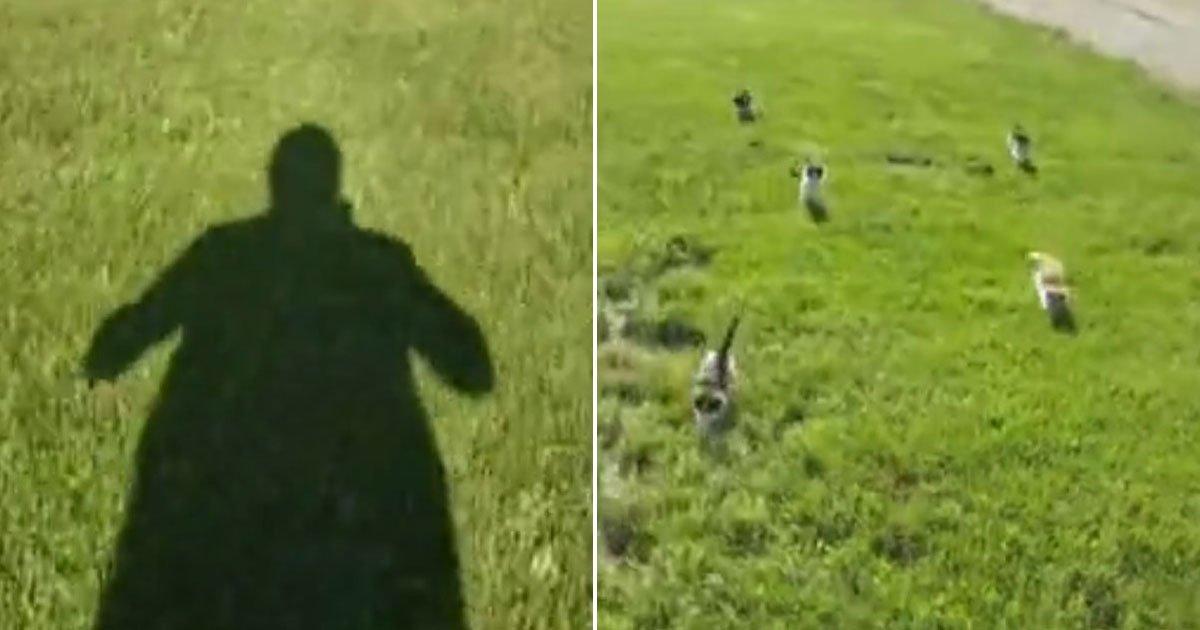 kittens chasing owner.jpg?resize=1200,630 - Il se fait poursuivre par ses châtons