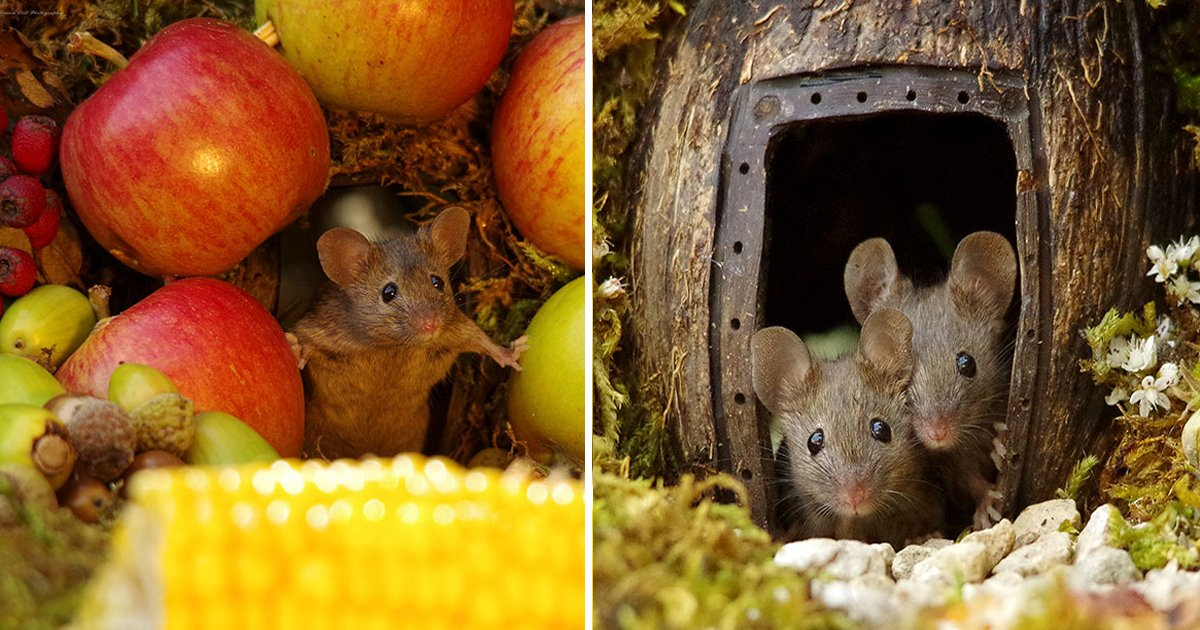 lk 1.jpg?resize=412,232 - A Photographer Found Family Of Mice Living In His Garden And He Made A Lilliputian Village For Them