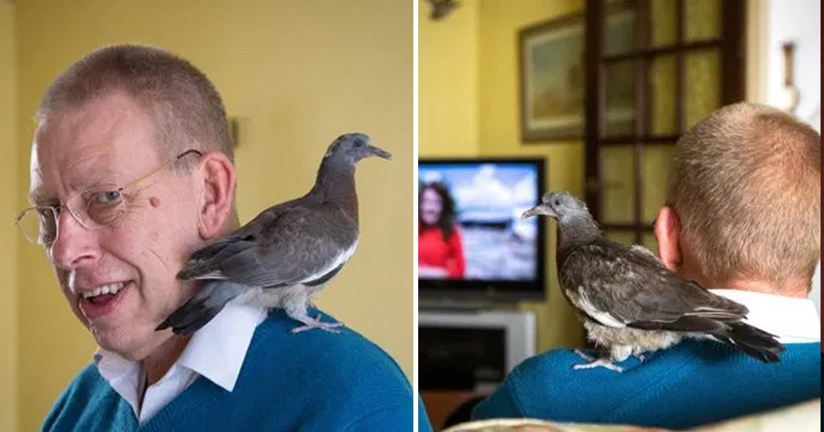 mk.jpg?resize=412,232 - Man Saved An Injured Pigeon And Now He Imitates Him As His Dad