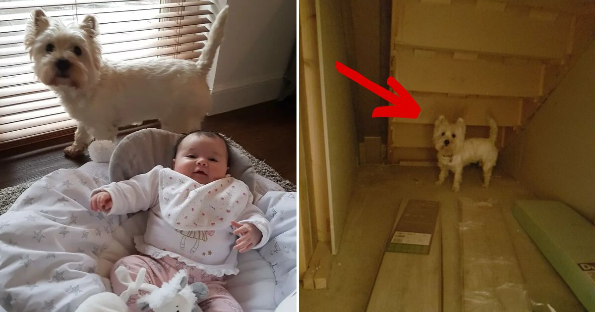 molly7.png?resize=1200,630 - Dog Owners Build Their Pooch Her Very Own Room So She Wouldn't Be Jealous Of New Baby