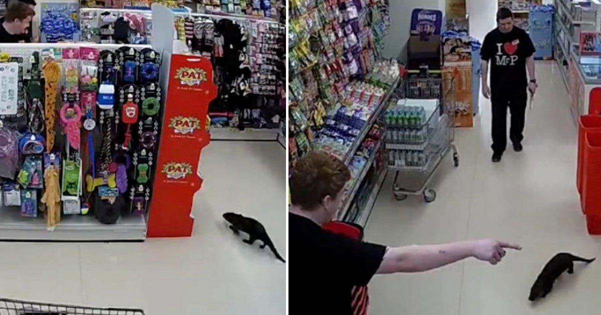 otter wandered around supermarket.jpg?resize=1200,630 - Otter Wandered Around A Supermarket Before A Rescue Team Took Him Away For Treatment