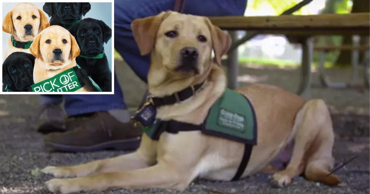 s1 15.png?resize=300,169 - Netflix vient de publier un joli documentaire montrant comment un chien devient un chien-guide