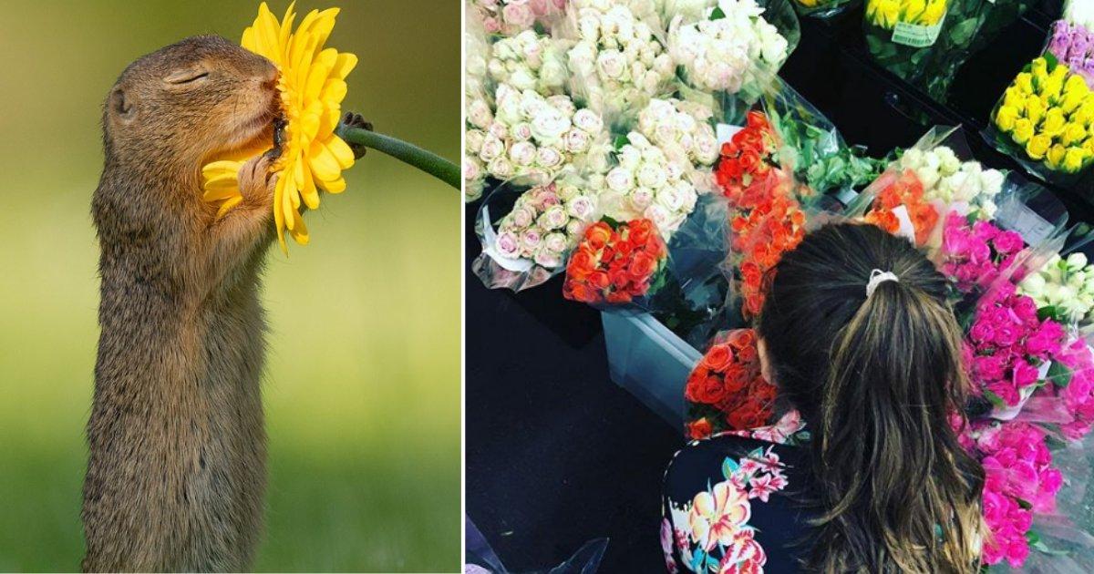 s4 6.png?resize=1200,630 - Un photographe a pris une photo rare d'un écureuil appréciant le parfum d'une fleur