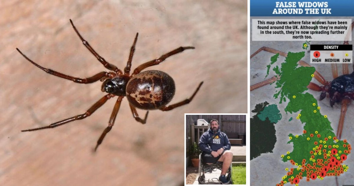 s6 9.png?resize=412,232 - Venomous False Widow Spider Has Made People Disabled