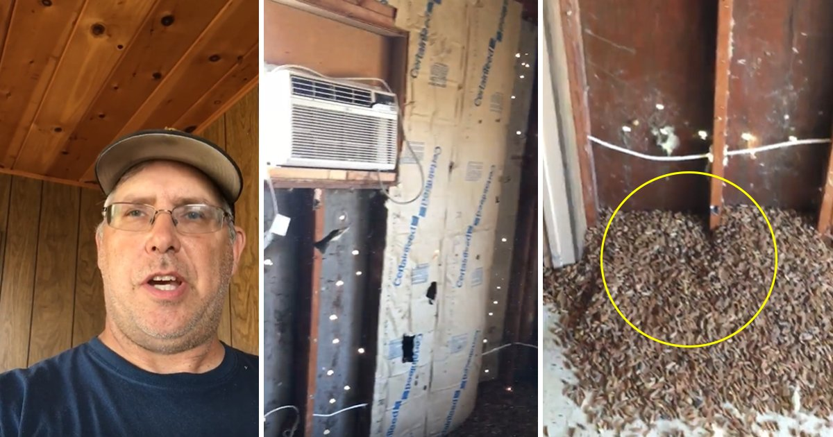 sdfsfsf.jpg?resize=412,232 - This Man Started Renovating His Pool House And Found A Hefty Amount Of Acorns
